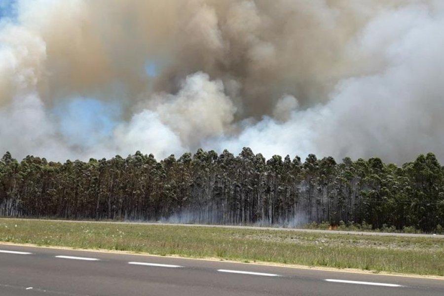 Alerta extrema por incendios forestales en toda la provincia