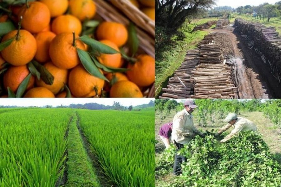 Corrientes: Sectores productivos empiezan a retomar actividades en la región