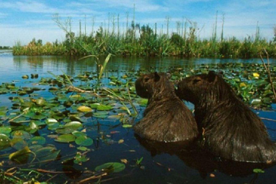 Piden la Ley de humedales para evitar la explotación de los recursos naturales en manos de unos pocos