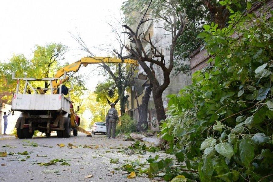 Corrientes: Continúa el Programa de Poda de Árboles en más barrios de la ciudad