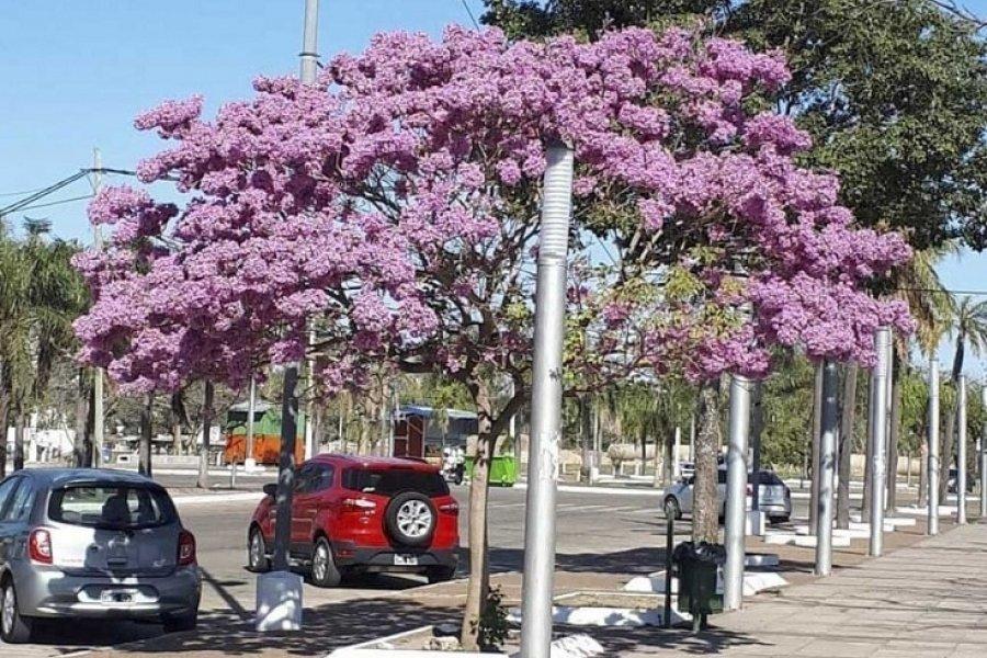Fin de semana caluroso: La temperatura máxima superaría los 30 grados en Corrientes