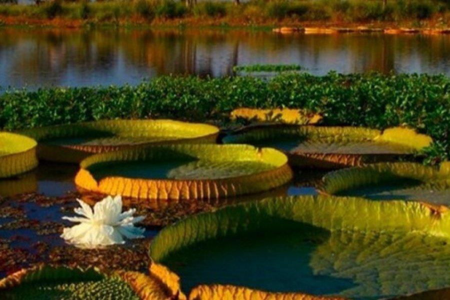 Introdujeron fauna extinguida en el Iberá con fines ambientales y turísticos pospandemia