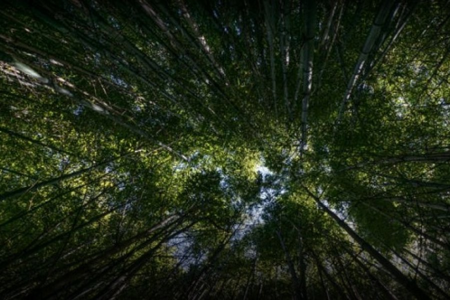 Incluye a Corrientes: Otorgan más de $84 millones a forestadores para enriquecer bosques
