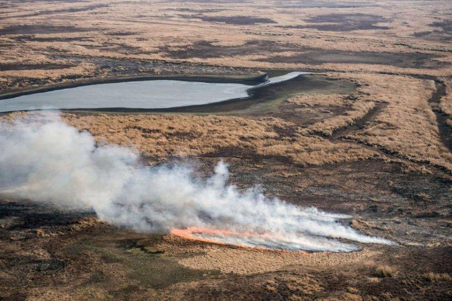 Ya se quemaron 90 mil hectáreas por los incendios en el Delta del Paraná