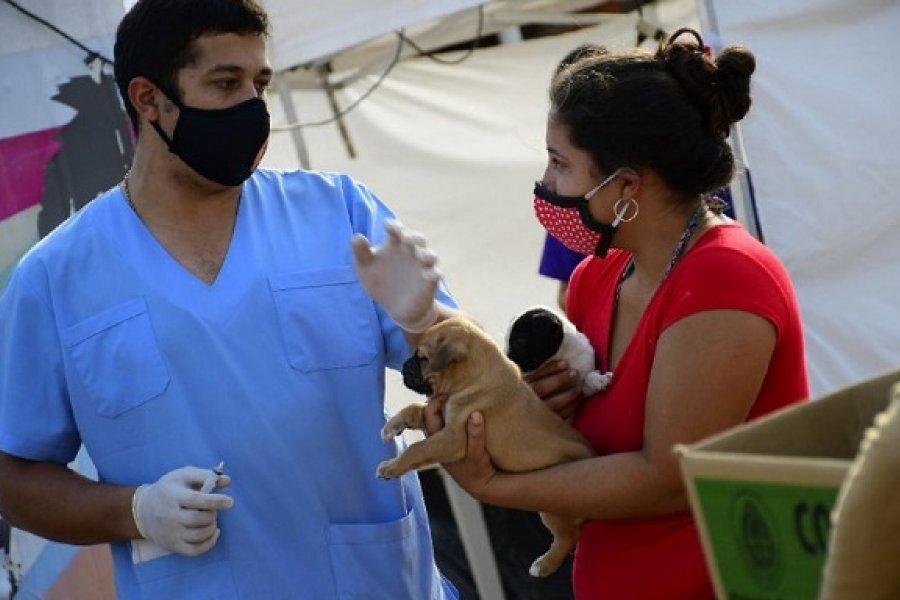 Mascotas Saludables: Las prestaciones gratuitas llegan a tres barrios esta semana