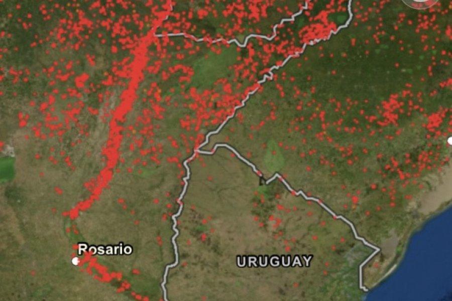 Ambientalistas alertan sobre incendios en el Paraná y reclaman por la Ley de Humedales