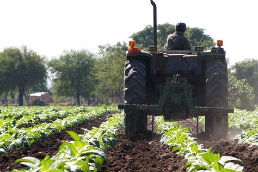 Nación envía más fondos a tabacaleros de Corrientes y suman $201 millones girados