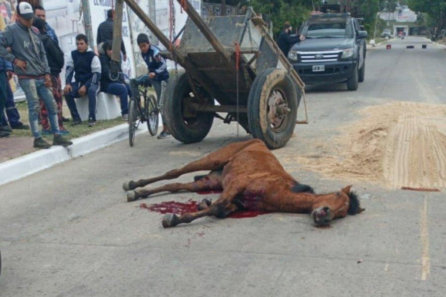 Sangriento final de un equino víctima de la tracción a sangre
