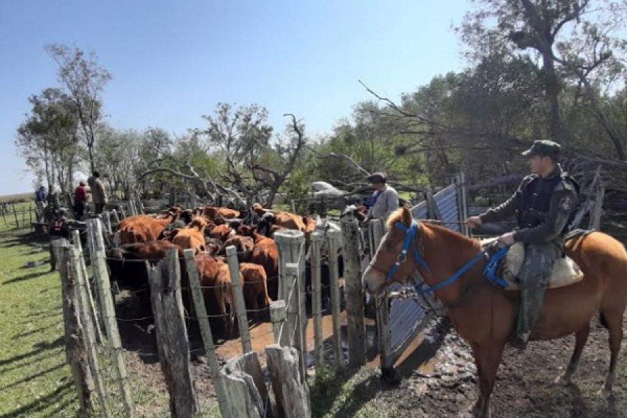 Ituzaingó: Policía Rural halló animales vacunos sin marcas
