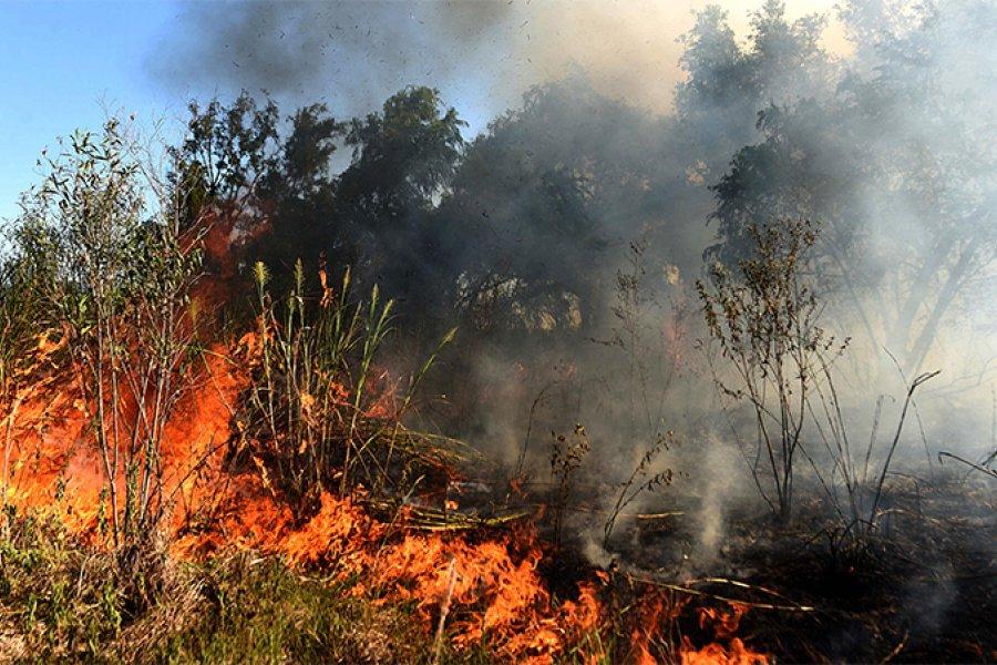 """""""Agosto es el mes con mayor registro de incendios en el Delta del Paraná"""""""