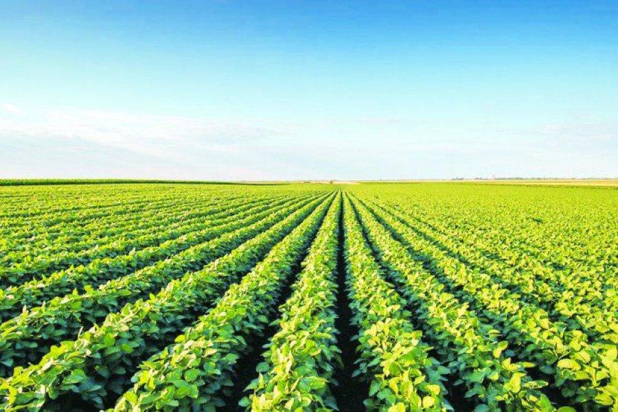 Argentina, el semillero del mundo