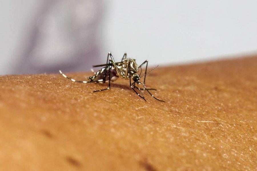 Aprobaron la liberación de 750 millones de mosquitos transgénicos