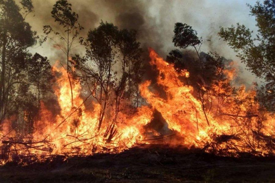 Corrientes: cambió el clima y se terminaron los incendios rurales