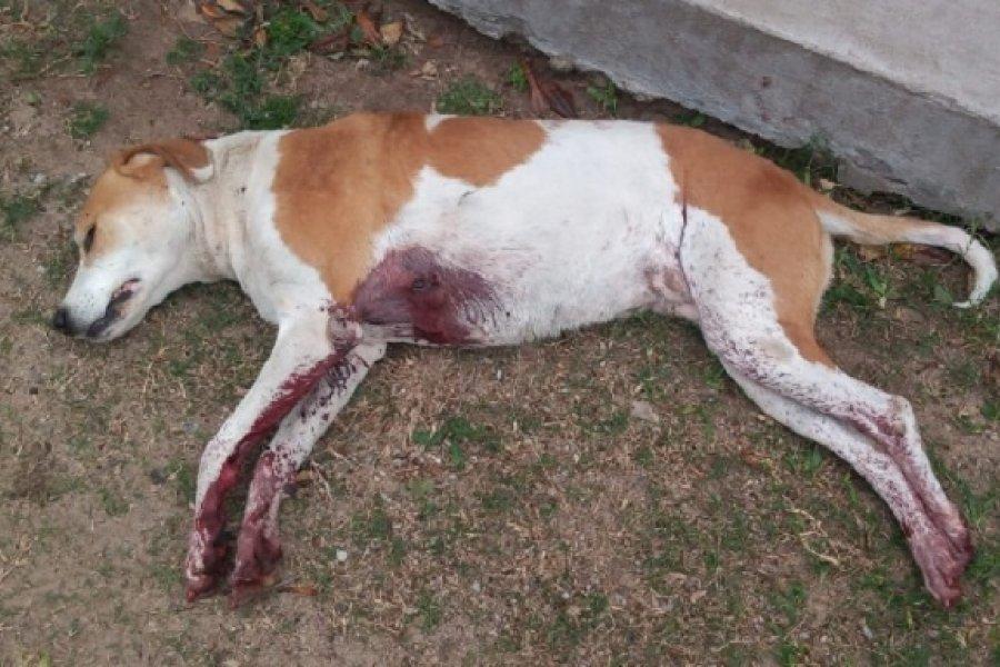 Peligroso sujeto mató a puñaladas a una perra e hirió a un hombre