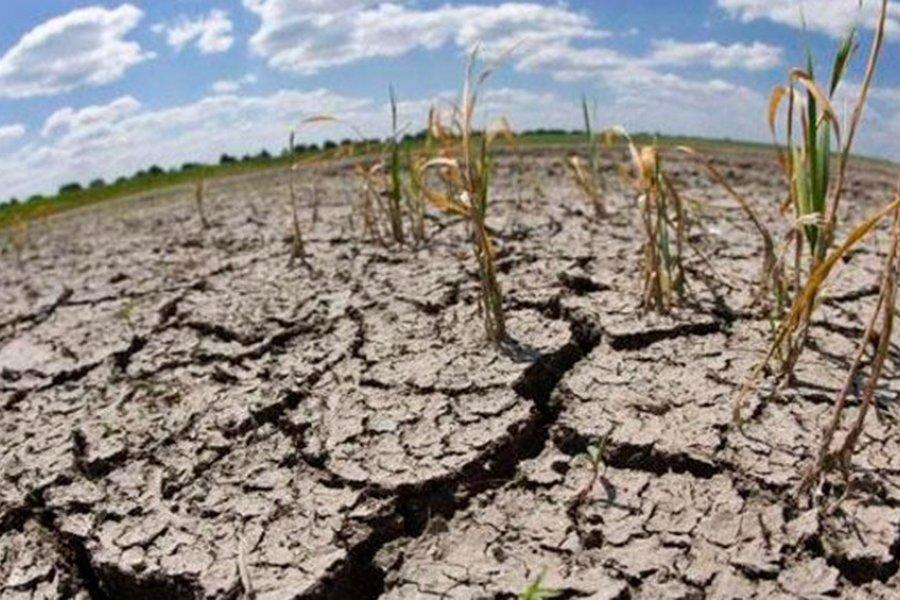 Piden la declaración de emergencia agropecuaria por sequía para el sector ganadero