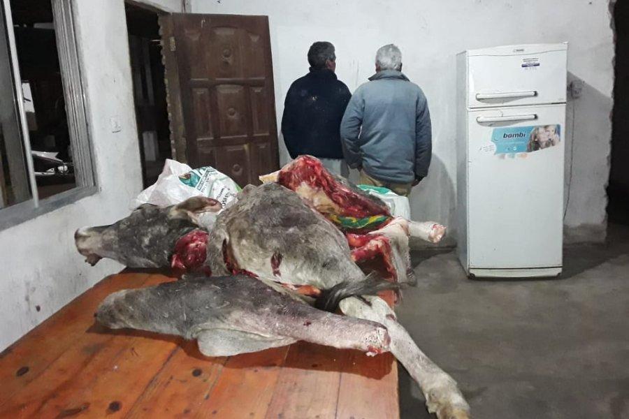 Detuvieron a dos hombres mientras faenaban una vaca robada