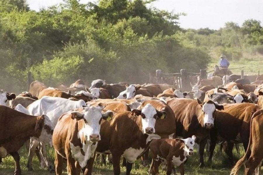 La Provincia dio a conocer el Decreto de Desastre y Emergencia Agropecuaria