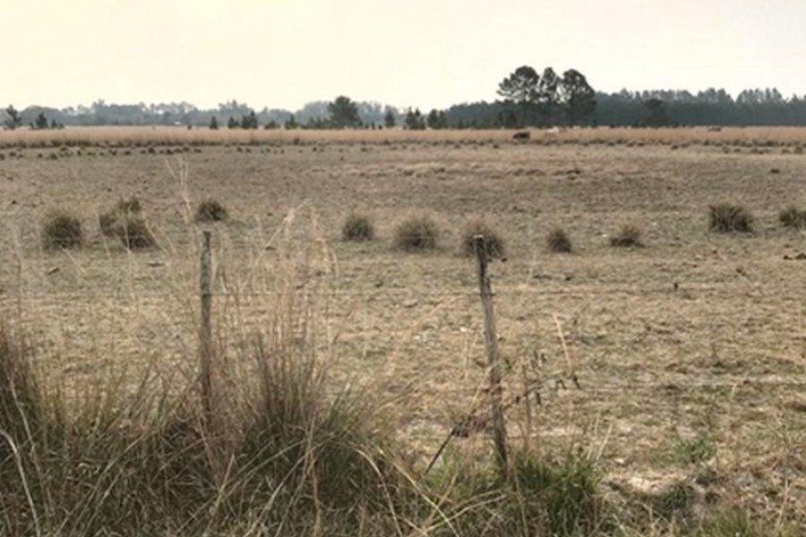Coordinan la recepción de declaraciones juradas por la emergencia agropecuaria