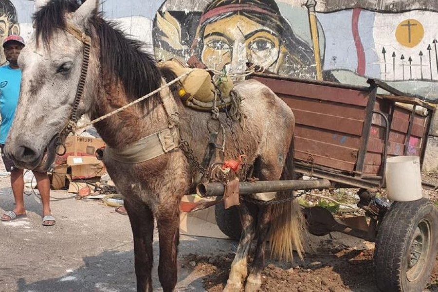 Rescatan a un caballo en muy mal estado y demoran a un hombre