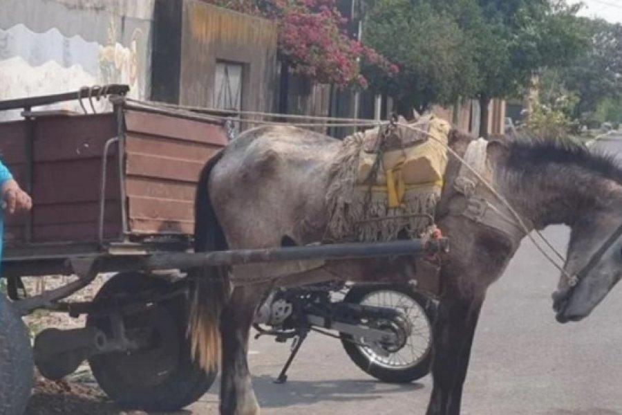 Detuvieron  a un sujeto por golpear salvajemente a un caballo