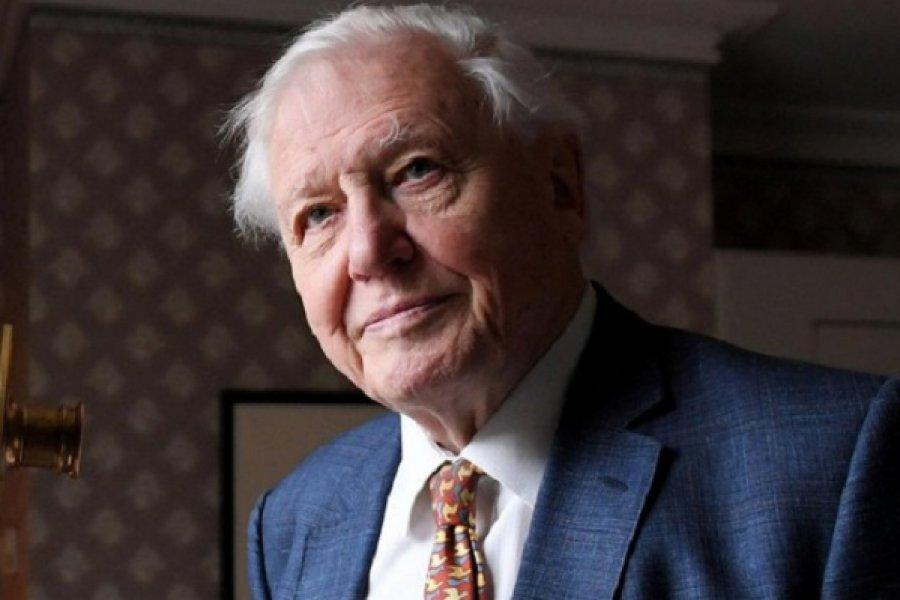 Nos enfrentamos a la posibilidad real de una sexta extinción masiva: el aterrador escenario que plantea el científico británico David Attenborough