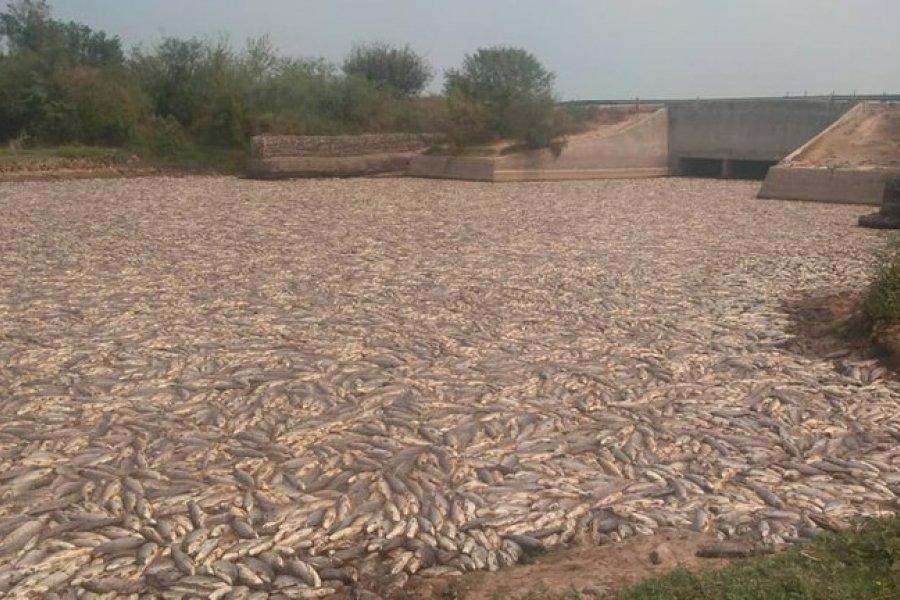 Miles de peces muertos: impactantes imágenes de la sequía y el cierre de compuertas en Formosa