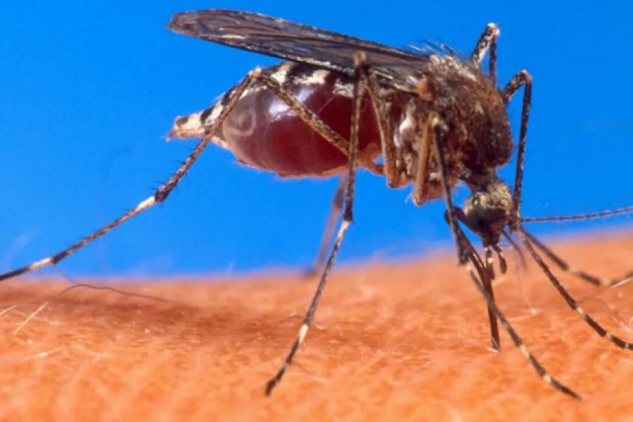 Detectan el primer caso sospechoso de infección humana por un virus mortal transmitido por mosquitos