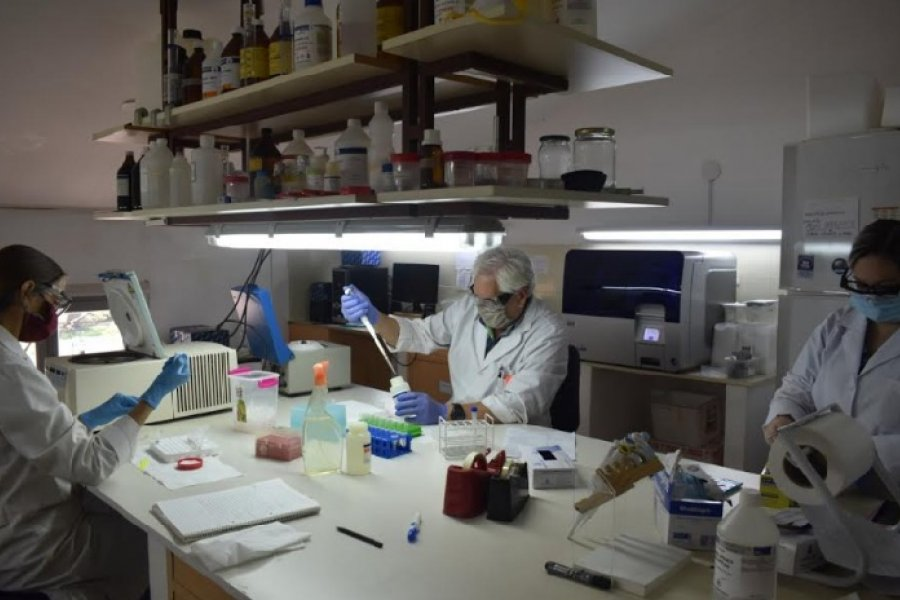 Investigadores explican cómo se analizan muestras de Covid-19