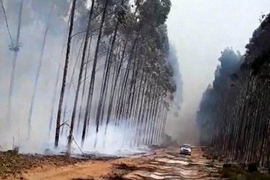 Urgen a evitar quemas por los enormes daños en Corrientes
