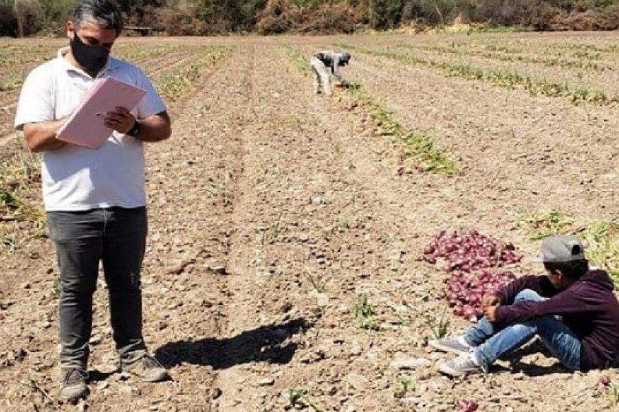 Trabajo infantil: descubren a niños cosechando cebollas en condiciones inhumanas en Santiago del Estero