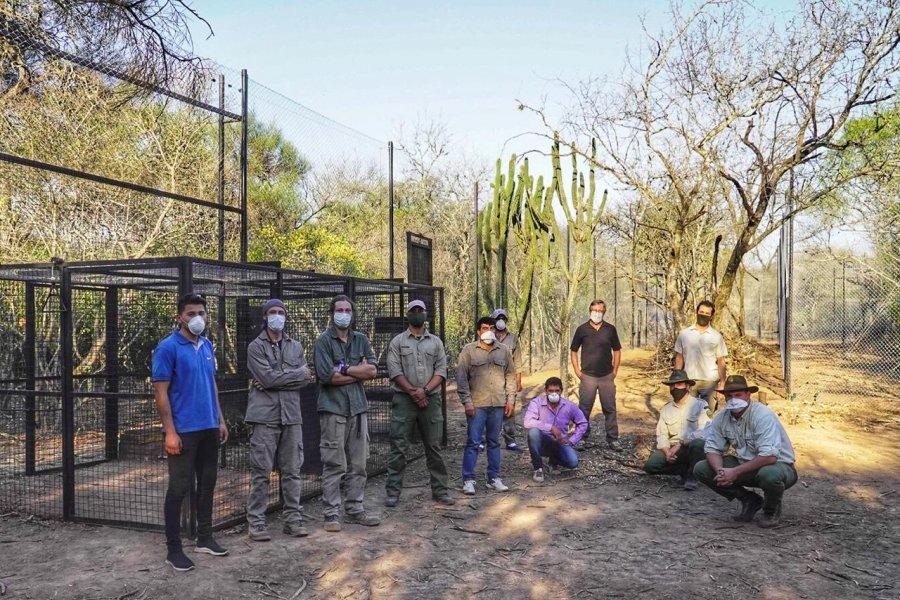 Construyen corrales de junta de yaguareté en el Parque Nacional El Impenetrable