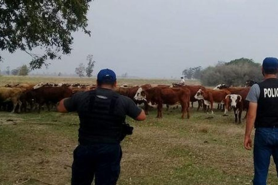 Personal policial recuperó ganado vacuno que había sido robado