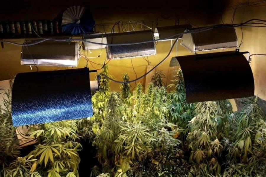Desmantelaron una organización dedicada a la comercialización de drogas ilegales