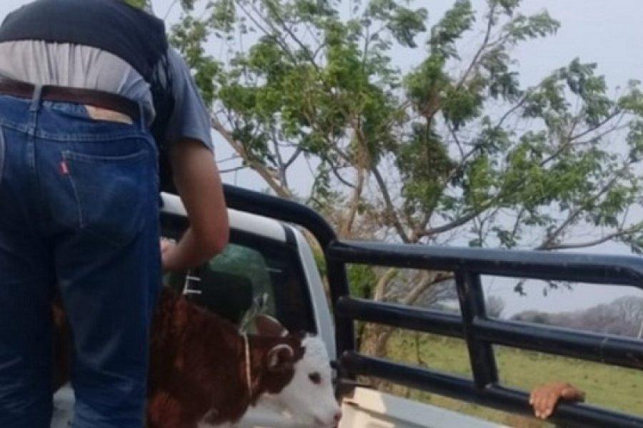 9 de Julio: Recuperaron terneros robados y detuvieron a tres hombres