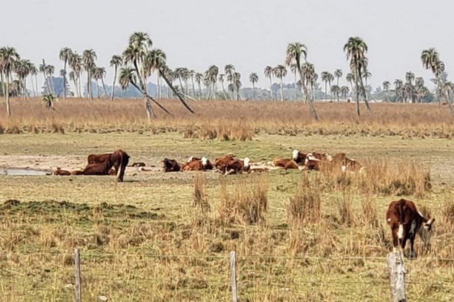 Sequía: En San Luis del Palmar comienza la entrega de alimento para ganado