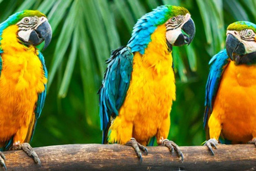 Un zoológico tuvo que aislar a cinco loros porque insultaban a los turistas