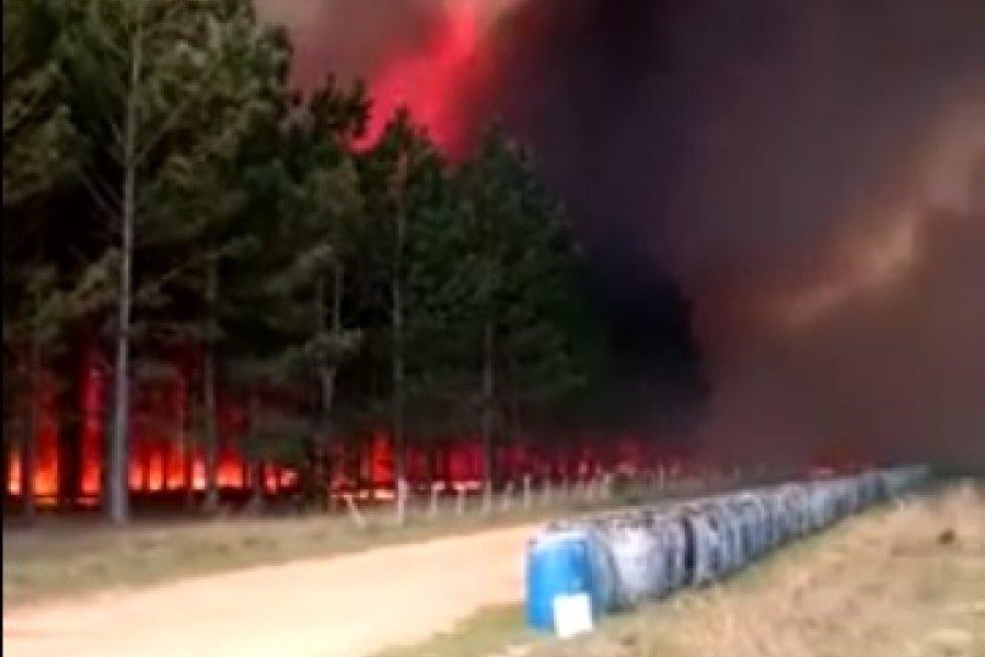 Impactantes imágenes del incendio en Santa Rosa