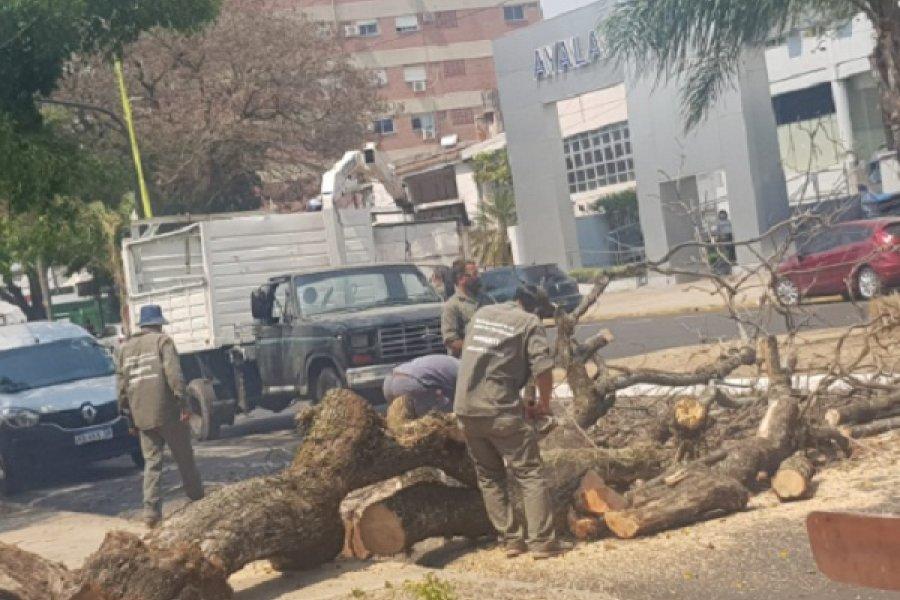 Añoso árbol cayó sobre dos vehículos por el fuerte viento