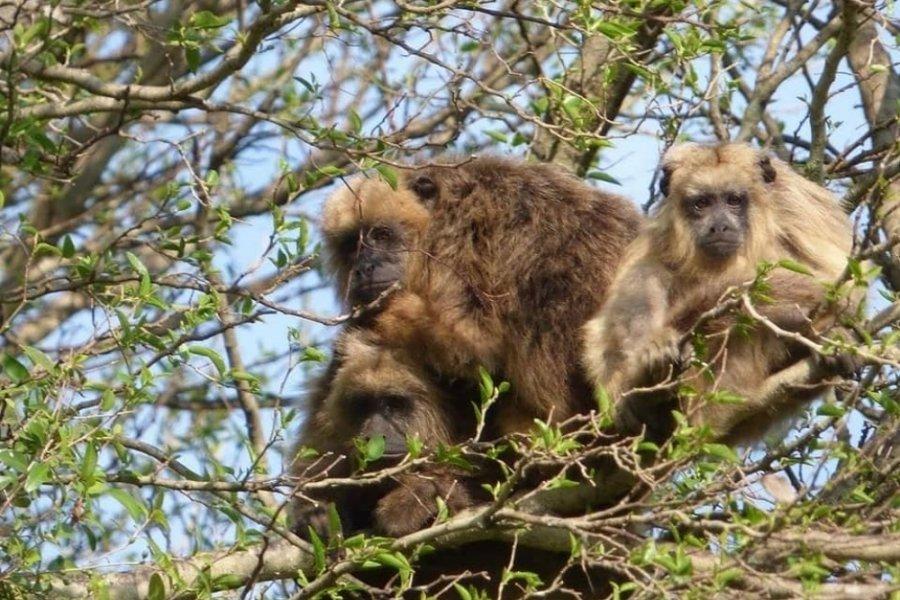 Observaron a monos sobrevivientes del fuego en el Parque provincial San Cayetano