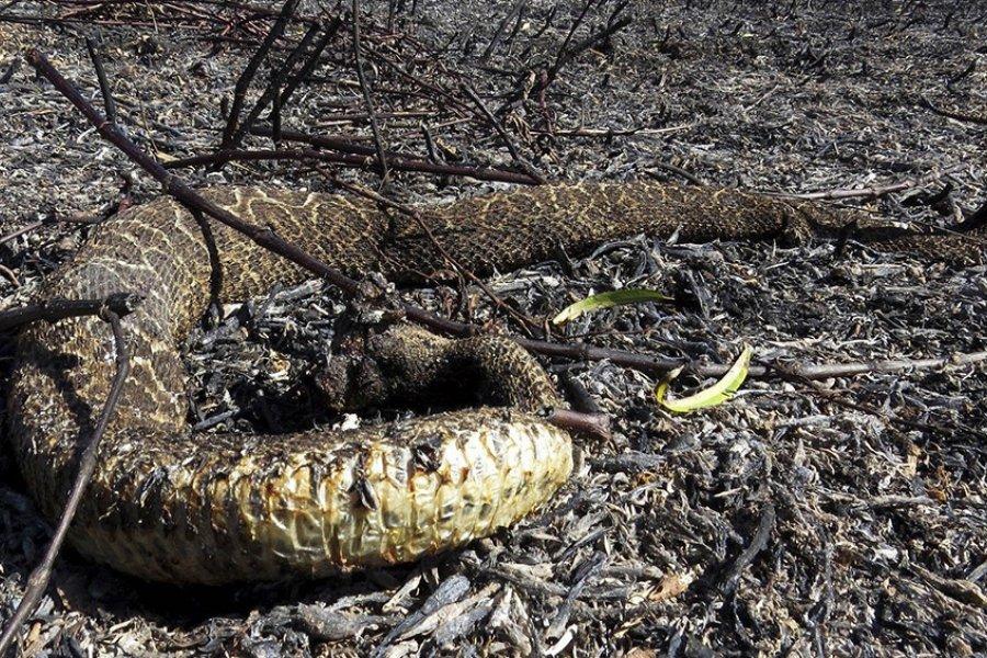 """Los incendios causaron la """"mortandad casi total"""" de la flora y fauna de los humedales"""