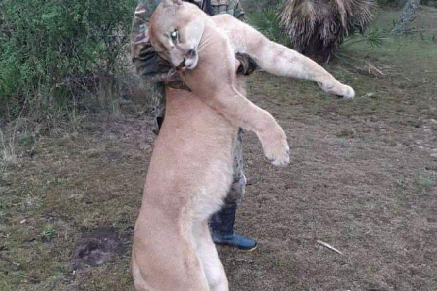 Denunciarán penalmente al hombre que mató a un Puma