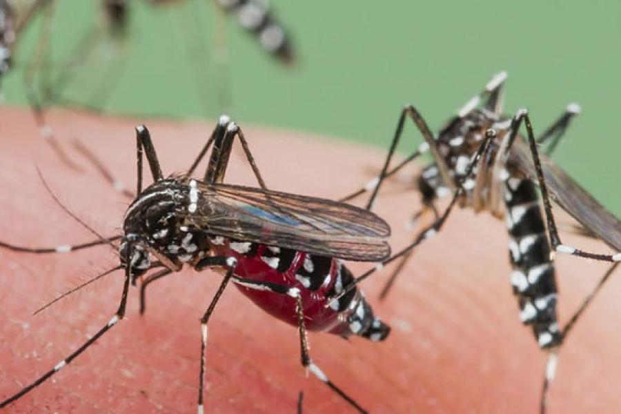 Aedes aegypti y dengue, oportunismo y malas costumbres