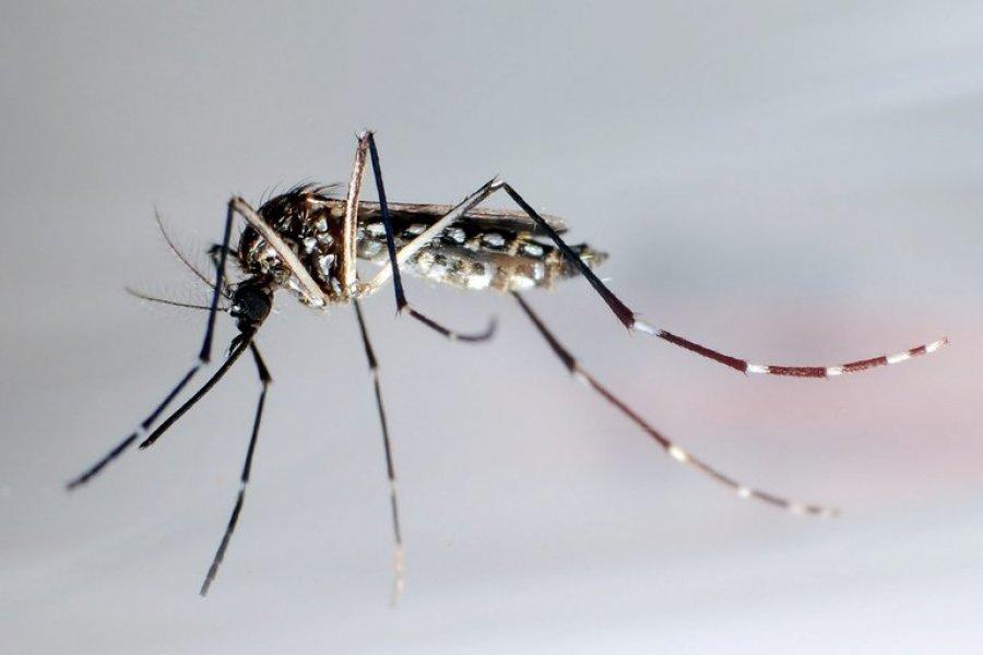 La vuelta del dengue: se lanzó la campaña nacional para prevenirlo