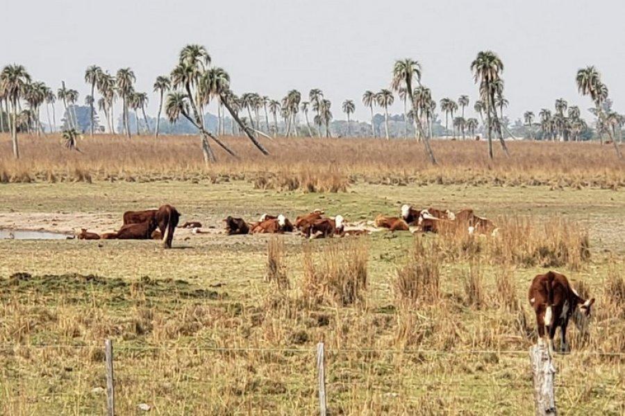 Nación declaró la emergencia agropecuaria para trece departamentos de Corrientes