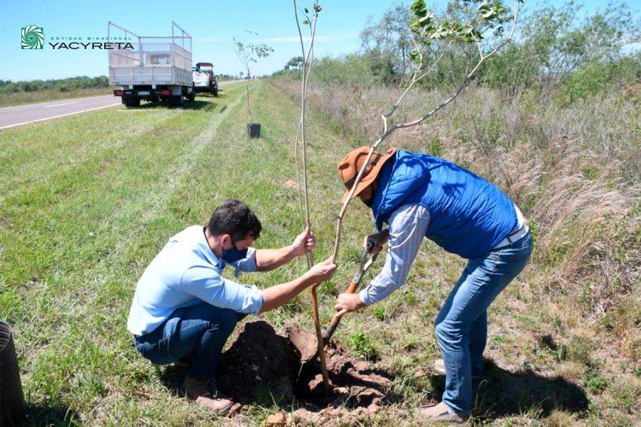 Yacyretá finaliza la primer etapa del proyecto Memoria de los Árboles