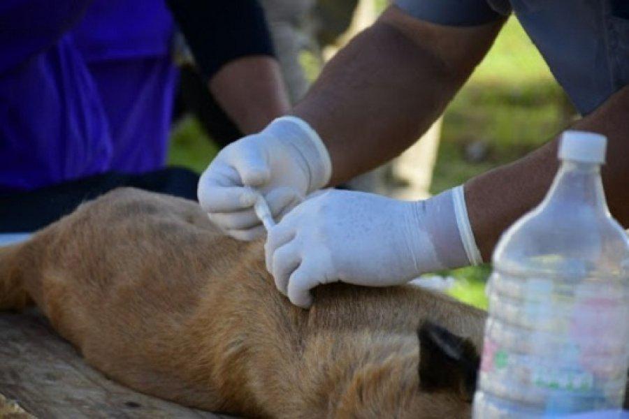 Mascotas Saludables estará en los barrios Plácido Martínez, Pío X y Santa Marta