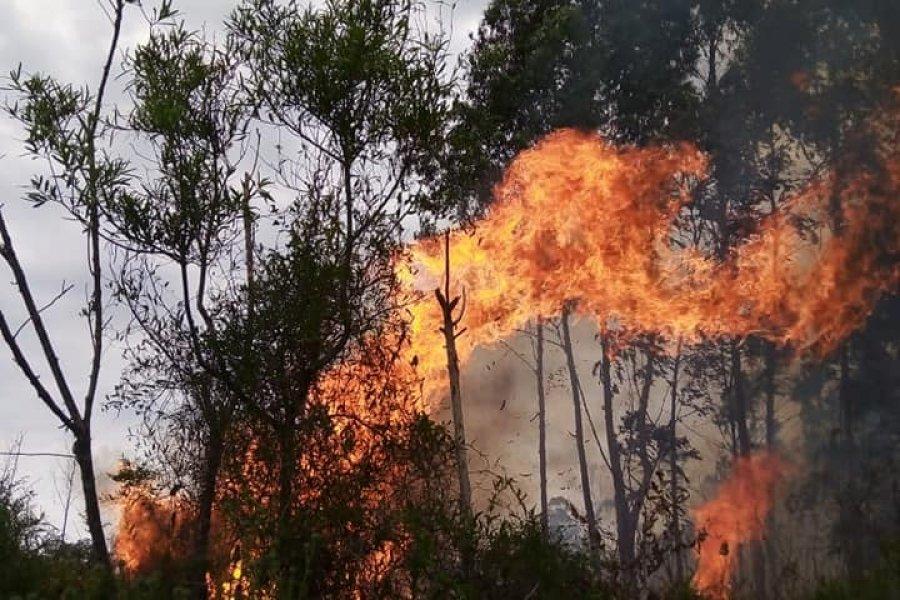 Impactante incendio en una zona Citrícola de Mocoretá