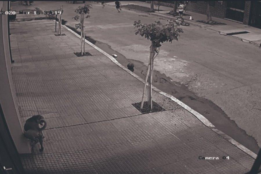 Carrero robó el celular a una niña en el barrio Luz y Fuerza