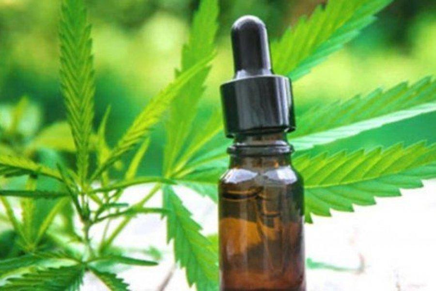 Cannabis medicinal: autocultivo y acceso gratuito, las claves de la nueva reglamentación