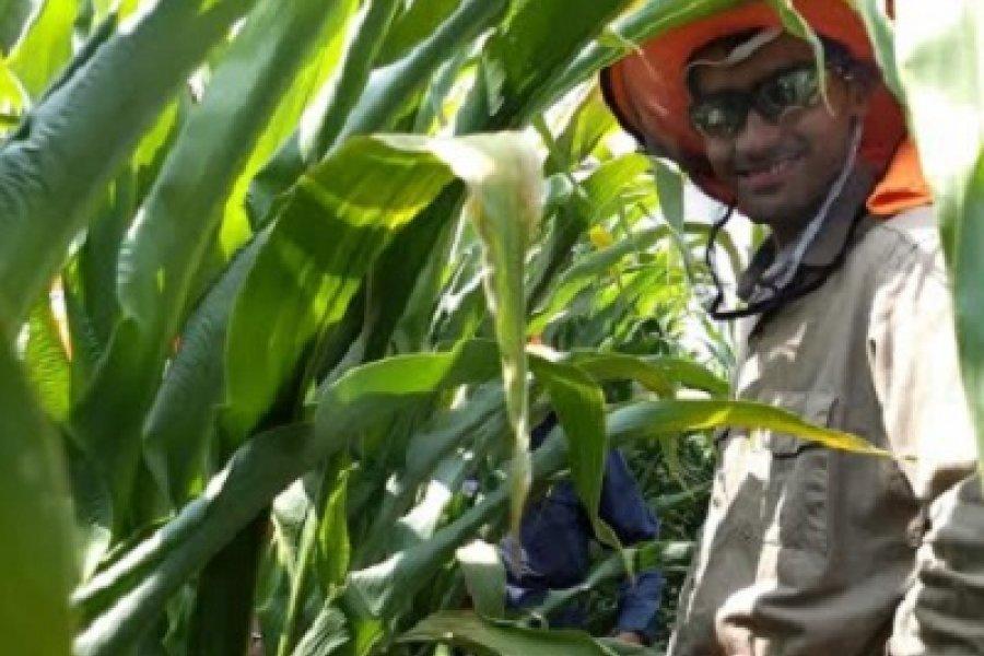 Como becario empezó a investigar sobre maíz en la UNNE y ahora sobresale en Estados Unidos